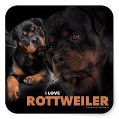 Kleber - Rottweiler. By www.dog-shooting.ch.  #hunde, #dog, #rottweiler, #kleber