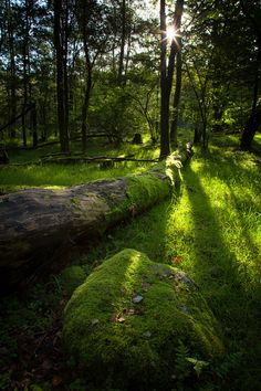 Summer Forest, Whitemoss, England  photo via styrana