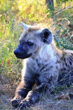 Pécsi Állatkert és Akvárium-Terrárium Overland Park, Beautiful Park, Hyena, Asia Travel, Predator, Kangaroo, Safari, Wildlife, Animals