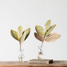 Magnolia Leaf Pick - Magnolia Market | Chip & Joanna Gaines