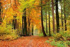 Vliesová obrazová fototapeta XL - Autumn Forest - podzimní les, velikost 330 x 220 cm Decorative Gourds, Images Of Colours, Artsy Photos, Autumn Forest, Walk In The Woods, Ms Gs, Autumn Theme, Dot And Bo, Scenery
