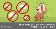 home-remedies-for-fleas-dnm