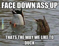 Animal memes Thats the Way We Like...