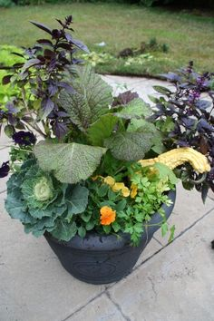 Chinese mustard in the middle, pansies, parsley, kale, and looks like purple basil.