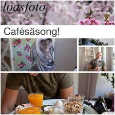Roligt att bli bloggad om :) #blogg #café #cupcake #brunch #dogfriendly #hundvänligt #göteborg #linné #gbgftw #blogga #bloggat