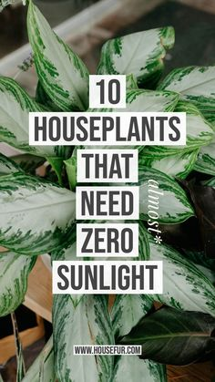 HOUSE FUR MENU 10 HOUSEPLANTS THAT NEED (ALMOST) ZERO SUNLIGHTTHE FUR & HOUSEPLANTSFEBRUARY 12, 2019 These