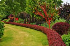 All sizes | Red border with a painted tree (Garden art) | Flickr - Photo Sharing!
