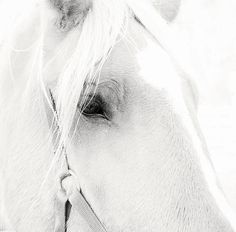 Sweet Soul Belgian Horse by Terry DeLuco