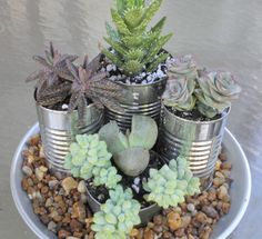 Beautiful.  Easy.  Nearly Free!  Succulents in cans for an indoor plate garden