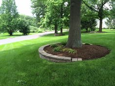mulching around tree rings...for our front yard tree?
