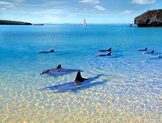 Delfines en Balandras, B.C.S.