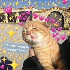 53 Ideas For Memes Apaixonados Animais New Memes, Funny Memes, Memes Amor, Memes Lindos, Heart Meme, Cute Love Memes, Crush Memes, Meme Pictures, Reaction Pictures