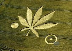 Now that is one beautiful crop circle!