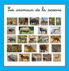 Images classifiées : les animaux de la savane - ti' loustics