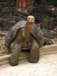 100 yr old tortoise. :)
