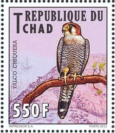 Red-necked Falcon stamps - mainly images - gallery format