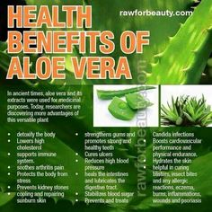 A few reasons why aloe is so amazingly good for your body