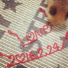 赤い糸 ぴーたんも気になっておる✌️ 撮影たのしみーい 色々小物を使いたいけど 荷物が増えそうで怖いやーつꉂꉂ #weddingphoto #wedding #赤い糸 #photwedding #フォトウェディング #hawaiiwedding #hawaii #today #love #小物 #ウェディング #dog #dogstagram #pomeranian #ポメラニアン #愛犬
