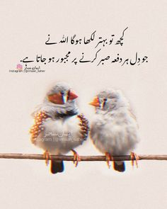 Urdu Quotes, Life Quotes, Beautiful Quotes About Allah, Secret Love Quotes, Love Husband Quotes, Do What You Want, Poetry, Feelings, Words