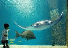 Welcome to See and Enjoy: atlantis bahamas great place to visit