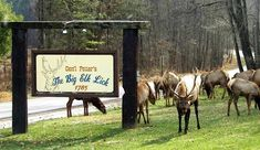 Bring your own horses to camp and ride the trails through the wilderness in the heart of the Benezette elk herd with access to Thunder Mountain Equestrian Trail. Deer Farm, Horse Camp, Trail Riding, Elk, Thunder, Wilderness, Equestrian, Camping, Horses