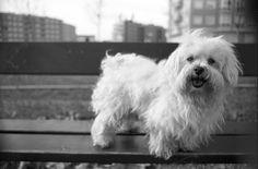 Poli sobre un banco del parque