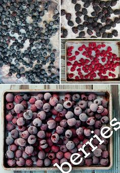 Enjoy berries all year around. Flash freeze large batches and store in your freezer | @Susan Salzman | The Urban Baker