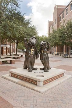 Albert & Alberta Gator   University of Florida Find Apartments Near UF today!