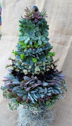 25 Modern Ideas to Design Live Christmas Trees with Succulents Succulent Arrangements, Cacti And Succulents, Planting Succulents, Planting Flowers, Floral Arrangements, Succulent Tree, Succulent Gardening, Container Gardening, Garden Art