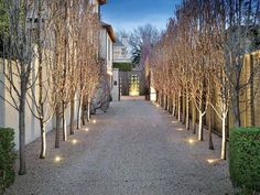 Gravel and spotlights make a feature of deciduous trees Driveway Landscaping, Outdoor Landscaping, Outdoor Plants, Outdoor Gardens, Landscape Lighting, Outdoor Lighting, Ornamental Pear Tree, Landscape Design, Garden Design
