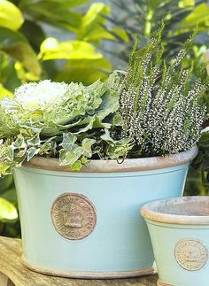 My husband carried one of these pots in Lavender, all the way home to WI after our trip to Kew to give me as a gift! Flower Boxes, My Flower, Flowers, Blue Garden, Garden Pots, Kew Gardens Wedding, Kew Gardens London, Coastal Gardens, Botanical Gardens