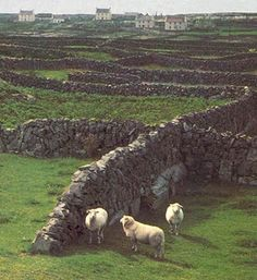 B And B Aran Islands ... about Aran Islands on Pinterest | Ireland, Islands and Playwright