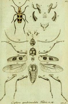 """Resultado de imagen para illustrated insects    inspiración """"por partes"""""""