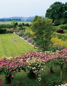 Traditional Garden by Maggie and Anthony McGrath /A view from a Sussex, England, house stretches toward the West Sussex countryside. A combination of green Lawson's cypress and golden Thuja plicata 'Zebrina' creates the flame pattern in the tapestry hedge. Rosa 'Albertine,' 'American Pillar,' and 'Champneys' Pink Cluster' billow over the rose garden pergola.      Photographer: Christopher Baker     Homeowner: Maggie and Anthony McGrath     Article: Orderly Conduct, October 2005