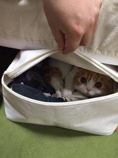 「衣服に猫の毛が付かないようにと購入したチャック付きの衣装ケース。」のYahoo!検索(リアルタイム) - Twitter(ツイッター)、Facebookをリアルタイム検索