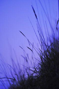 periwinkle twilight