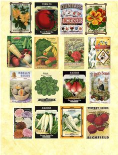 seed packets - free