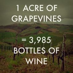 1 Acre Grapevines = 3,985 Bottles of Wine