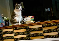 Loganberry Books Cat in Cleveland Ohio (photo by Bob Perkoski)