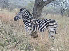 Picture I took in the Kruger National Park South Africa