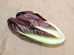 Rossa Di Treviso Radicchio  | Baker Creek Heirloom Seed Co