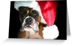 Christmas Boxer dog Greeting card by Ritmo Boxer Designs