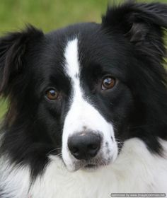 The work of the Border Collie Trust #dog #dogs #blog #bordercollie #collie
