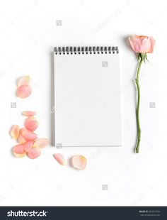 Rose Flower And Petals On Empty Page Notebook Isolated On White. Top View. Copy Space For Text. Feminine Concept. Mock Up Top View Stock Photo 552814750 : Shutterstock