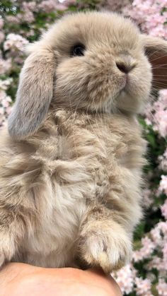 Cute Baby Bunnies, Baby Animals Super Cute, Cute Little Animals, Cute Cats, Animals And Pets, Funny Animals, Pet Bunny Rabbits, Cute Animal Pictures, Cute Creatures