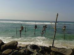 Waligama  stilt fishermans. Sri lanka william tours Negombo http://www.williamtoursandtravelsrilanka.com