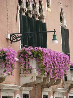 Window Flowers, Venice, Italy province of Venezia , Veneto | by amy coady