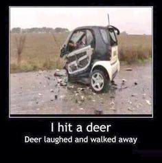 LOL now u see why I love big lifted trucks. I don't like smart cars. Guess was not smart enough to dodge the deer. So they should change the name to Dummy car. LMFAO