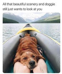 Animals And Pets, Baby Animals, Funny Animals, Cute Animals, Cute Puppies, Cute Dogs, Dogs And Puppies, Funny Animal Photos, Animal Memes