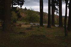 Table au milieu des arbres